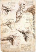 Anatomical studies of the shoulder - Leonardo Da Vinci