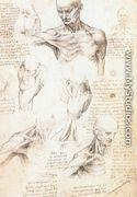 Anatomical studies of a male shoulder - Leonardo Da Vinci