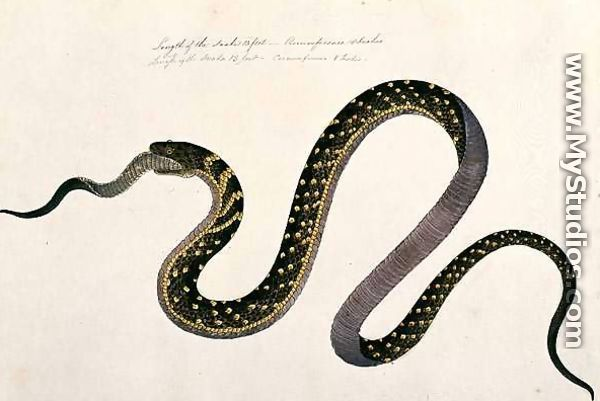 chinese art snake - photo #13