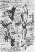 Anatomical Studies   Larynx And Leg - Leonardo Da Vinci
