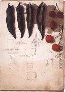 Fruit Vegetables And Other Studies - Leonardo Da Vinci