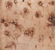 Flower Studies - Leonardo Da Vinci